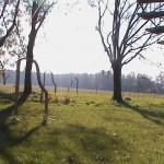 Klangtor_Woldzegarten-15_2011